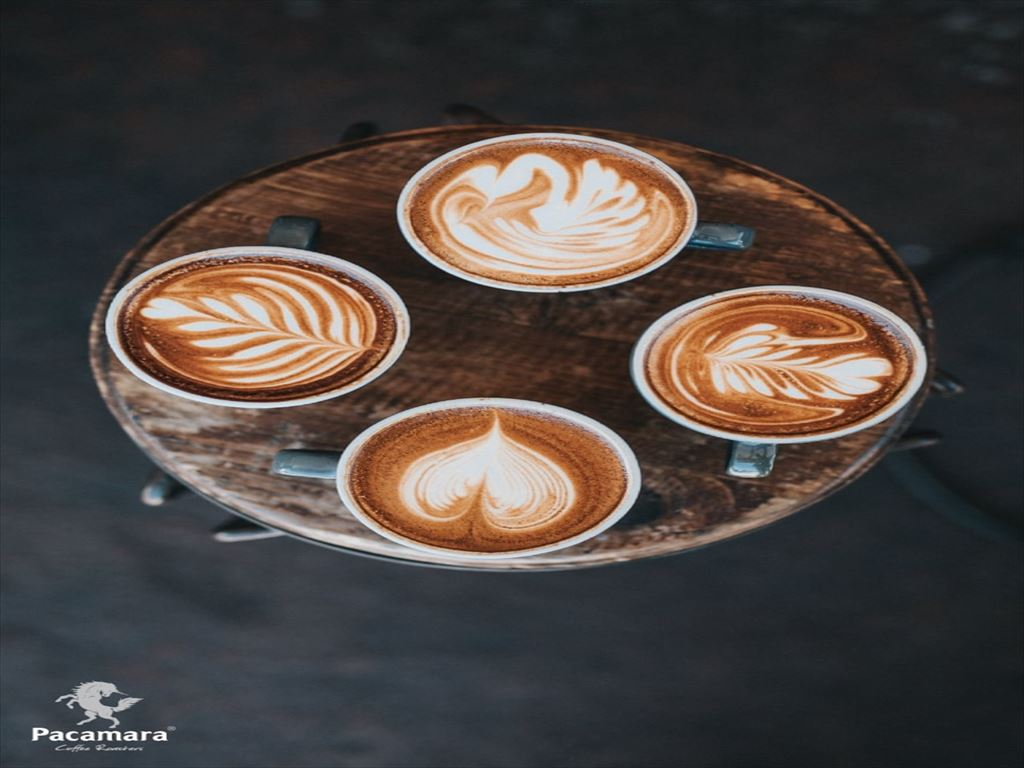 Pacamara-Coffee