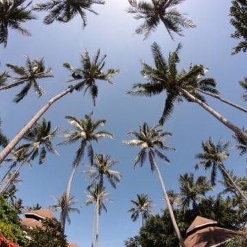 タイ タオ島
